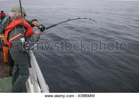 angler on a fishing trawler reeling a coal fish , Norway - Stock Photo
