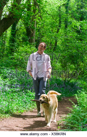 Man and dog walking in forest among bluebell flowers - Stock Photo