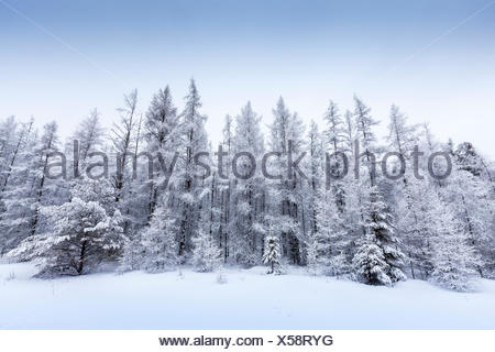 Snow covered forest in Algonquin Provincial Park, Ontario, Canada - Stock Photo