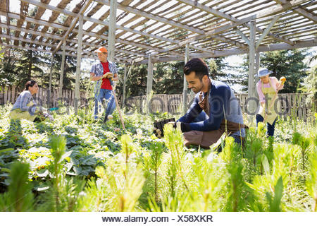Workers tending to plants at plant nursery - Stock Photo