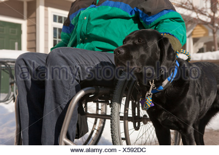 Woman with multiple sclerosis in a wheelchair with a service dog - Stock Photo