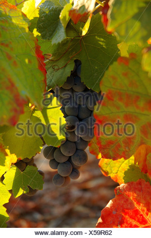 Winegrowing in the Vale Mendiz, Pinhao, Douro Region, North Portugal, Europe - Stock Photo