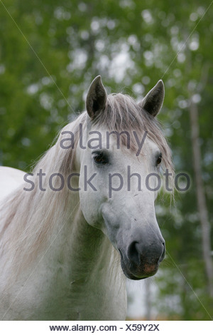 Close-up view of a horse's face - Stock Photo