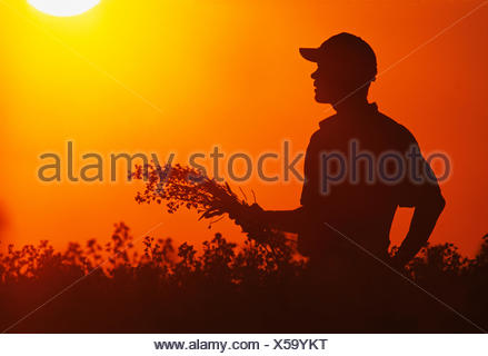 Silhouette of a farmer inspecting his mid growth, bloom stage canola crop at sunset / near Holland, Manitoba, Canada. - Stock Photo
