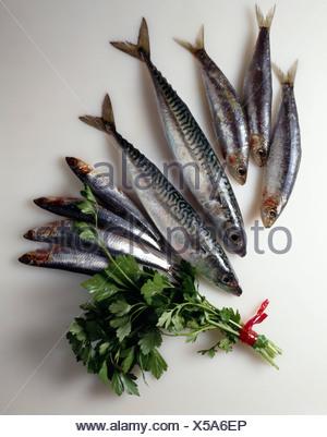 Fresh mackerel, sardines and anchovies - Stock Photo