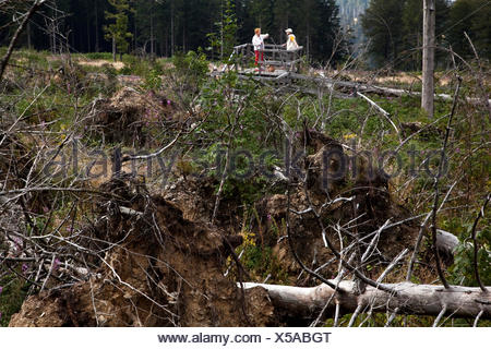two people looking at storm losses at Kyrill path, Germany, North Rhine-Westphalia, Sauerland, Schmallenberg - Stock Photo
