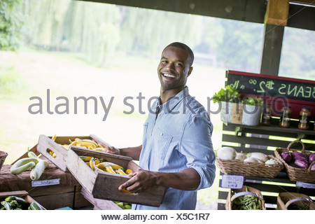 An organic fruit and vegetable farm. A man carrying vegetable boxes. - Stock Photo
