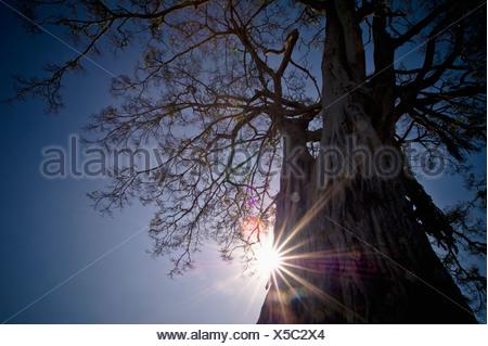 The Sunlight Shines Behind A Tree Trunk; Kenya - Stock Photo