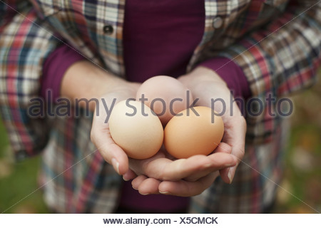 A woman holding a clutch of freshly laid hen's eggs - Stock Photo