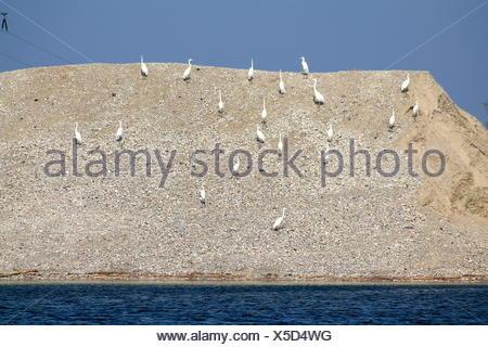 Egret colony at Lake - Stock Photo