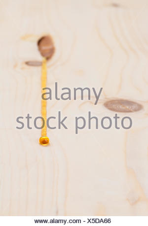 Sap oozing from the pitch pocket of pinewood - Stock Photo