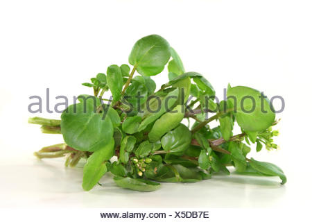 ingredients spices - Stock Photo