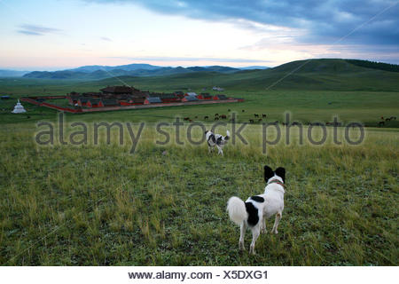 The Amarbayasgalant monastery in the northern Mongolia, Selenge province - Stock Photo