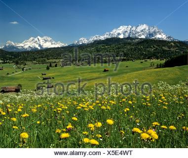 Tonihof Wildlife Park, Flower meadow in spring, Wetterstein Range, Mittenwald Forest, Upper Bavaria, Bavaria, Germany, Europe - Stock Photo