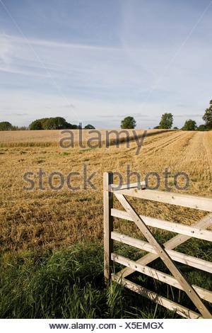 Gate opening onto wheat field - Stock Photo