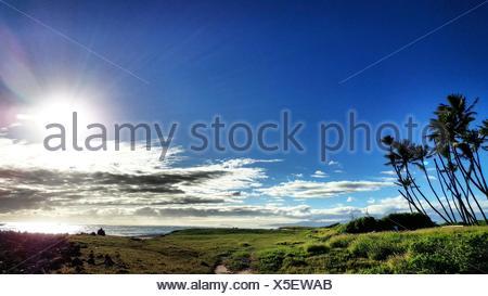 Palm Trees On Beach Against Bright Sun - Stock Photo