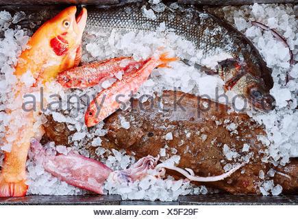 Variety of fish on ice - Stock Photo