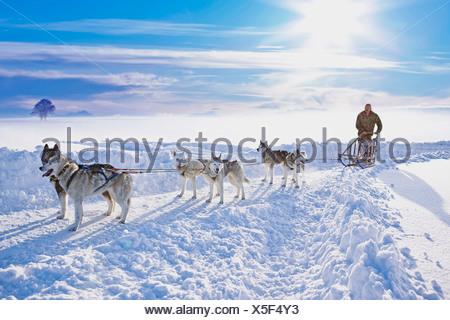 Dog sledge - Stock Photo