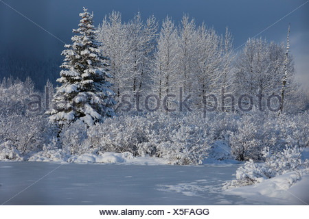 Snowcovered winter scene of a small pond and trees in the Portage Valley, Southcentral Alaska, Winter - Stock Photo