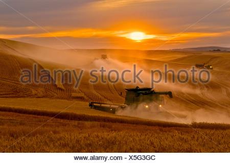 A John Deere combine harvests wheat at sunset on the rolling hills of the Palouse Region / near Pullman, Washington, USA. - Stock Photo