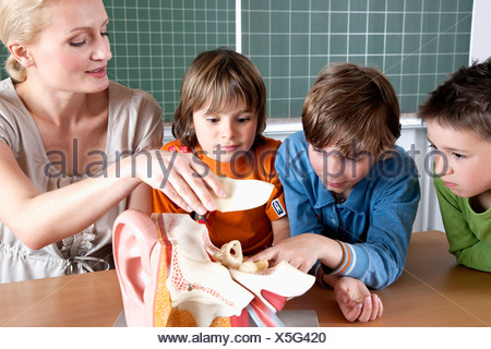 teacher demonstrating model of human body to three pupils - Stock Photo