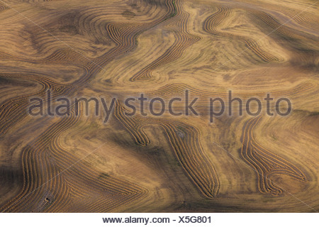 Farmland landscape, with ploughed fields and furrows in Palouse, Washington, USA - Stock Photo