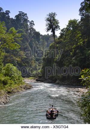 jungle park indonesia jungle bohorok-river bukit-lawang sumatra bohorok-river - Stock Photo