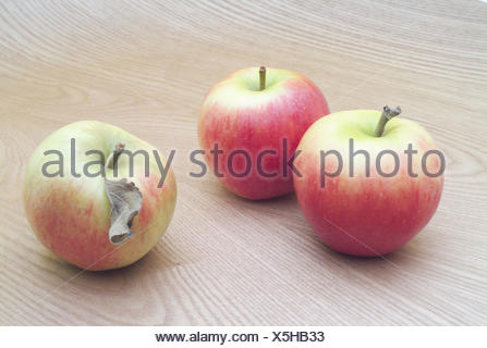 wooden table, apples, Braeburn, three, completely, table, wooden board, wooden surface, fruits, fruit, pomes, Malus, apple sort, ripe, eat, nutrition healthy, rich in vitamins, Still life, product photography - Stock Photo