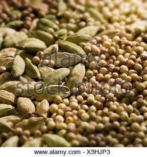 Seasonings Kardamom corianders dried close-up seasonings capsules seeds Kardamom-Kapseln Cardamomkapseln seed capsules - Stock Photo