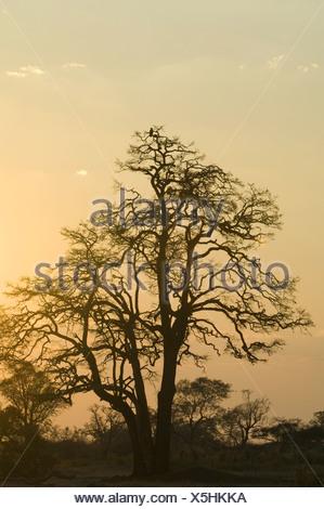 Makwa Pan, Hwange National Park, Matabeleland North Province, Zimbabwe - Stock Photo