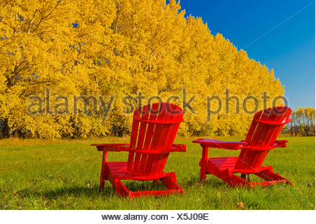 ... Two Chairs At The Edge Of A Hay Field With A Shelterbelt In Autumn  Colours In