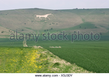 Great Britain, England, Wiltshire, Vale of Pewsey, Pewsey White Horse, Chalk figure of white horse carved into hillside - Stock Photo