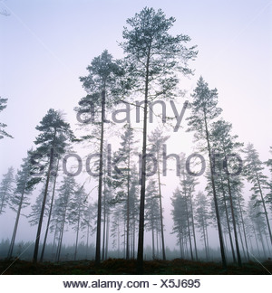 View of coniferous forest - Stock Photo