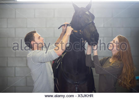 Male and female stablehands putting bridle onto horse in stables - Stock Photo