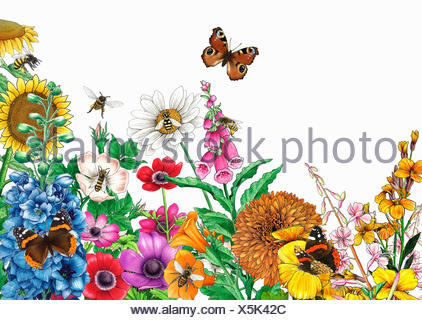 Butterflies and bees on bright multicolored garden flowers - Stock Photo
