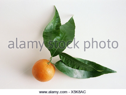 Clementine with leaves, white background - Stock Photo