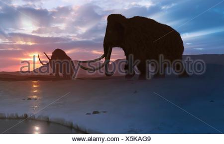 Artwork of the woolly mammoth (Mammuthus primigenius), or tundra mammoth. This animal lived during the Pleistocene epoch and into the early Holocene, and as such coexisted with humans. It was roughly the same size as a moden African elephant. Covered in thick hair, it was well adapted to the cold environment in which it lived - in northern America, Europa and Asia. - Stock Photo