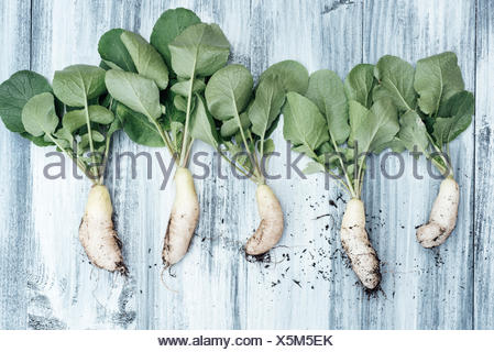 Freshly picked small raddish (Icicles) in a row - Stock Photo