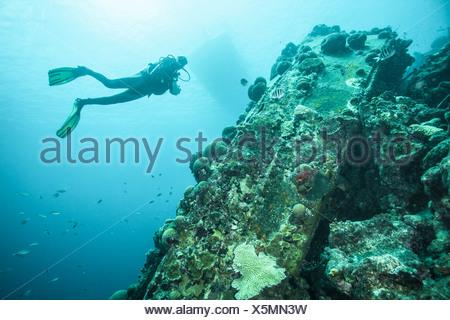 Diver examining underwater reef - Stock Photo