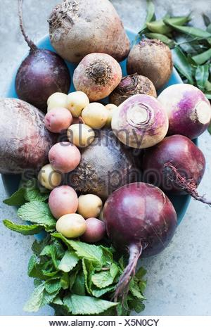 Overhead view of selection of Autumn vegetables - Stock Photo