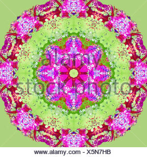 A symmetric Floral Montage from flower photographs, - Stock Photo