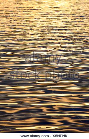 Evening, evening light, Cairngorms, detail, graphical, highlands, highland, Loch, Loch Morlich, Morlich, national park, park, re - Stock Photo