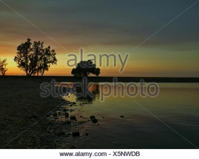 Silhouette Trees On Beach Against Cloudy Sky During Sunset - Stock Photo