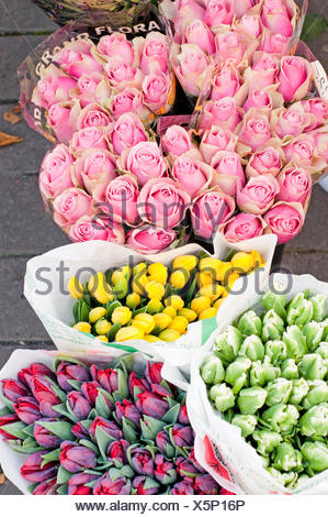 Shot of roses and tulips in outside - Stock Photo