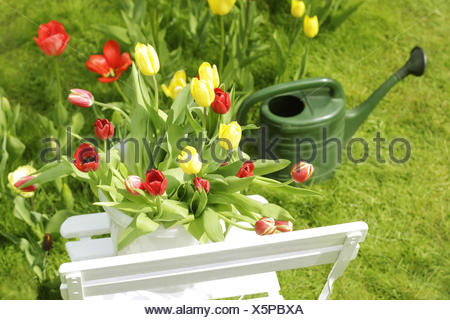 tulips on a garden chair - Stock Photo