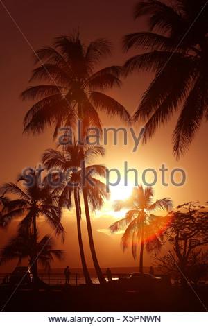 Port Douglas, Queensland, Australia, palms, sun, Sundown, sunset, Sunset, romantic, pair, couple, beach, seashore, seafront, pro - Stock Photo