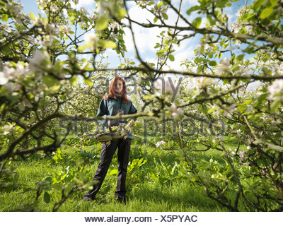 Woman With Apple Blossom In Orchard - Stock Photo