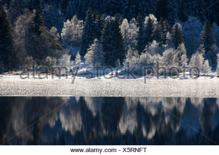 Frost-covered trees reflected on the half-frozen surface of Schluchsee (Schluch Lake), Black Forest, Baden-Wuerttemberg, German - Stock Photo