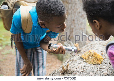 Siblings exploring fungus on tree trunk in forest - Stock Photo