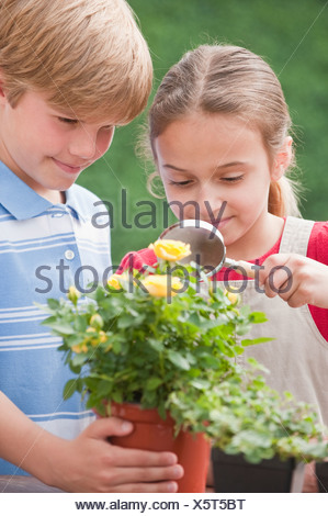 Two young children examining a flower - Stock Photo